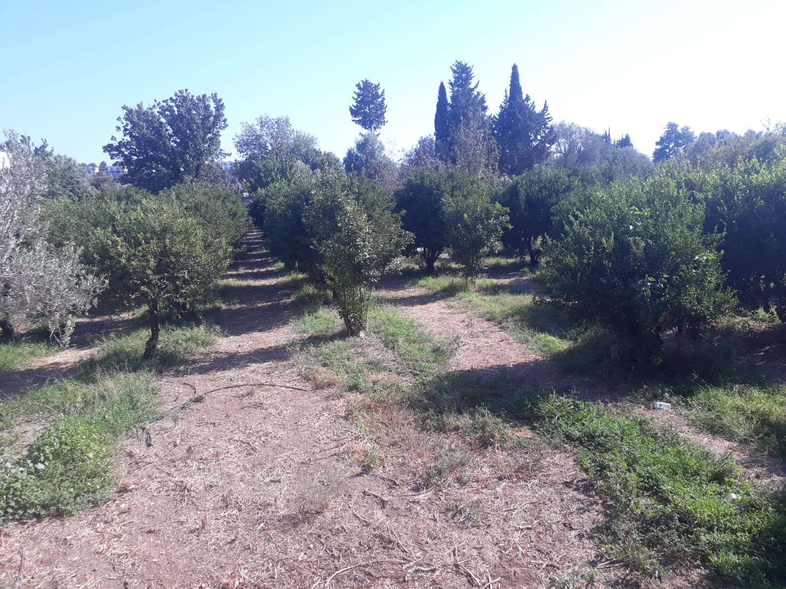 Land for sale in Bodrum Turkey