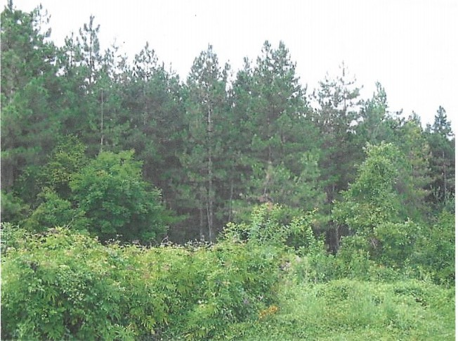 Forest Land