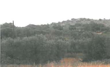 Property for Sale, Cyprus, Larnaca, Anglisides, Plots of Land 20113