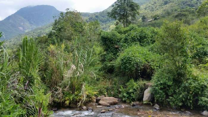 Property for Sale, Peru, Amazonas, Ocumal District, Large Plot of Land 20141