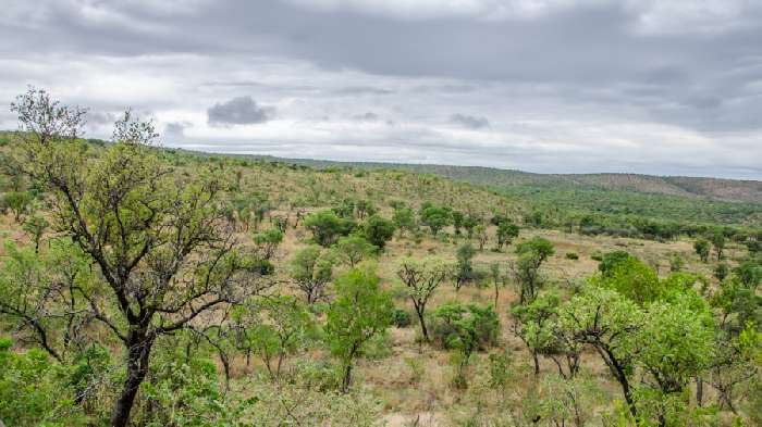 Property for Sale, South Africa, Limpopo, Bela Bela Villa & Game Reserve 20179