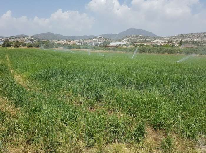 Property for Sale, Cyprus, Larnaca, Anglissides, Plot of Land 20079