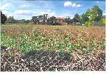 Plot of Land for sale in